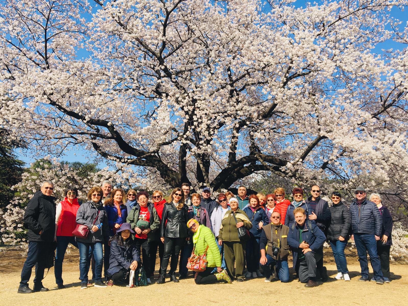Japonia Festival Ciresi