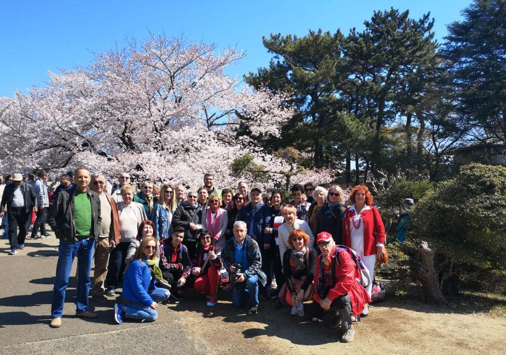 Japonia Festivalul Ciresilor