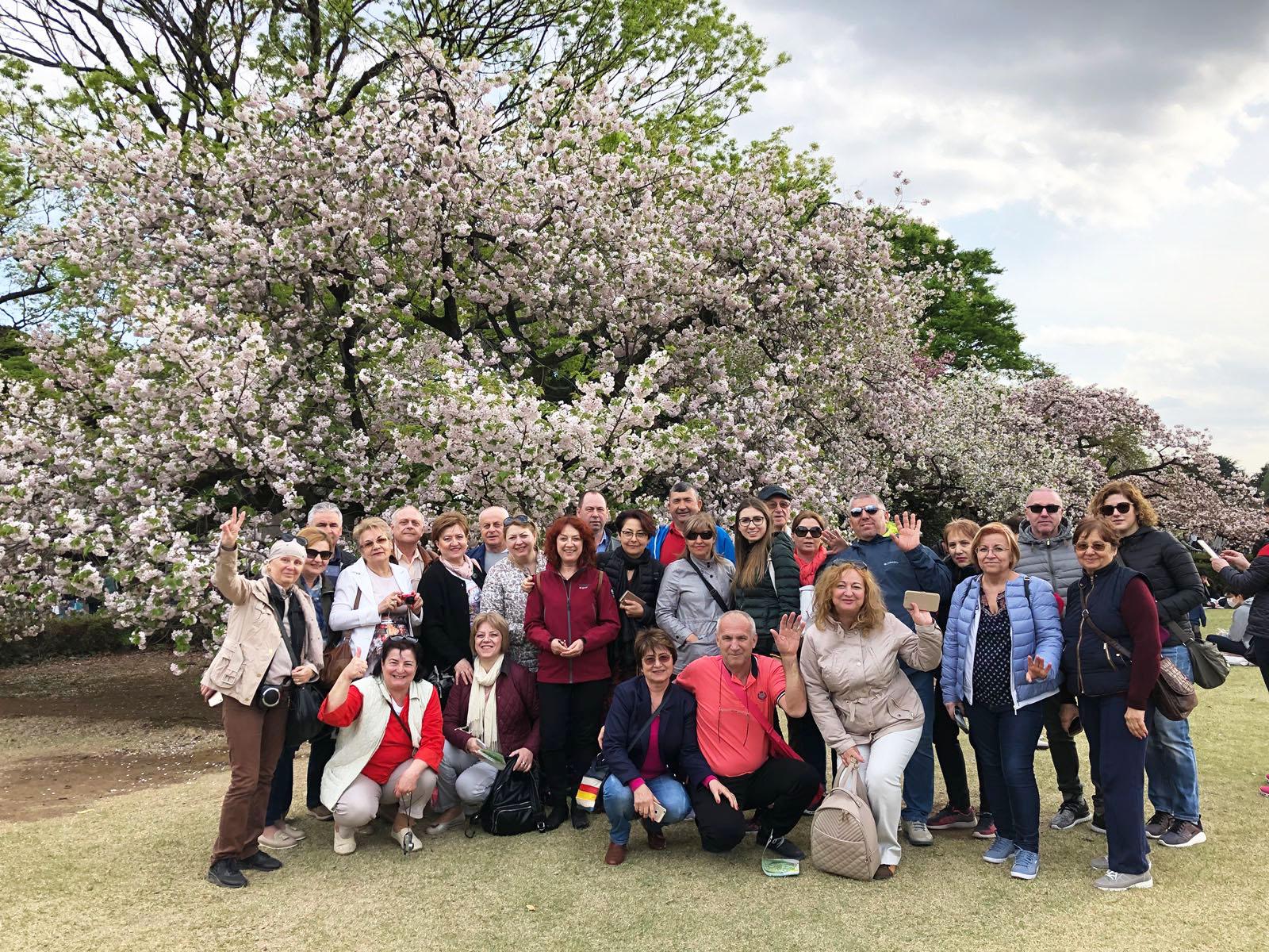 Japonia Festivalul Ciresilor in Floare
